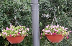 Αναστολή του δοχείου λουλουδιών στοκ εικόνα με δικαίωμα ελεύθερης χρήσης