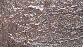 Ανατολή με το χιόνι στα δέντρα φιλμ μικρού μήκους