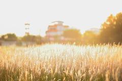 Ανατολή νωρίς το πρωί στον τομέα Στοκ εικόνα με δικαίωμα ελεύθερης χρήσης