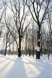 ανατολή πάρκων Στοκ εικόνες με δικαίωμα ελεύθερης χρήσης
