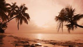 Ανατολή πέρα από τη θάλασσα Καταπληκτικό τοπίο παραλιών φοινικών Punta Cana απόθεμα βίντεο