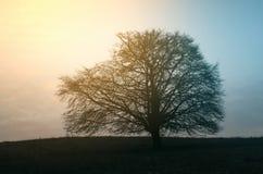 Ανατολή πέρα από το λιβάδι με το δέντρο το πρωί Στοκ εικόνα με δικαίωμα ελεύθερης χρήσης