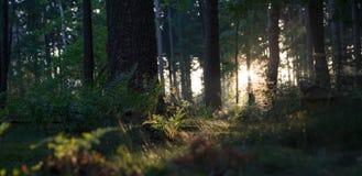 Ανατολή που φθάνει στη δασική χλόη Στοκ εικόνες με δικαίωμα ελεύθερης χρήσης