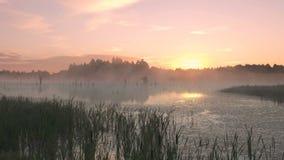 Ανατολή πρωινού της Misty στο έλος απόθεμα βίντεο