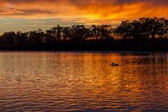Ανατολή σε Mannum riverbank, Νότια Αυστραλία Murray ποταμών με το π στοκ φωτογραφίες