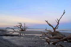 Ανατολή στην παραλία Driftwood Στοκ Φωτογραφία