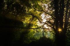 Ανατολή στο μυστήριο δάσος Στοκ Εικόνες