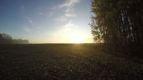Ανατολή φθινοπώρου πέρα από τους misty τομείς πρωινού και τα άλση δέντρων, χρονικό σφάλμα απόθεμα βίντεο
