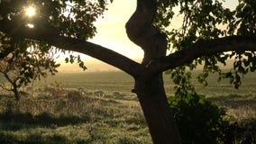 Ανατολή φθινοπώρου στο χωριό και το παλαιό δέντρο μηλιάς απόθεμα βίντεο