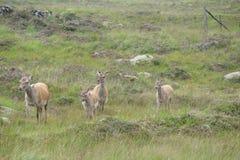 Ανατολική πλευρά της Σκωτίας Τοπία της άγριας σκωτσέζικης φύσης Στοκ φωτογραφίες με δικαίωμα ελεύθερης χρήσης