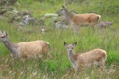 Ανατολική πλευρά της Σκωτίας Τοπία της άγριας σκωτσέζικης φύσης Στοκ Φωτογραφίες