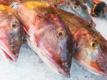 Ανατολικό ατλαντικό κόκκινο gurnard για την πώληση σε μια αγορά ψαριών Στοκ φωτογραφίες με δικαίωμα ελεύθερης χρήσης