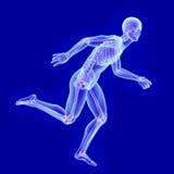 Ανατομία ακτίνας X ενός τρέχοντας ατόμου με την ορατή κοινή ζημία Στοκ Εικόνες