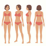 Ανατομία ανθρώπινου σώματος, μπροστινή, πίσω, πλάγια όψη διανυσματική απεικόνιση