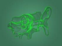 Ανατομία αυτιών ακτίνας X Στοκ φωτογραφίες με δικαίωμα ελεύθερης χρήσης