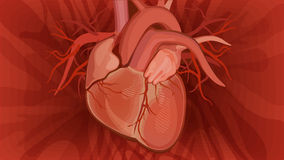 Ανατομικό διάνυσμα καρδιών στο κόκκινο υπόβαθρο Στοκ εικόνα με δικαίωμα ελεύθερης χρήσης