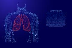 Ανατομικό όργανο πνευμόνων κορμών ατόμων μέσα στο αναπνευστικό σύστημα υγείας ιατρικής από τις φουτουριστικές polygonal μπλε γραμ διανυσματική απεικόνιση