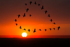 Ανατολή, αγάπη ηλιοβασιλέματος, ειδύλλιο, πουλιά Στοκ Εικόνα