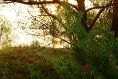 Ανατολή μέσω των δέντρων Στοκ εικόνες με δικαίωμα ελεύθερης χρήσης