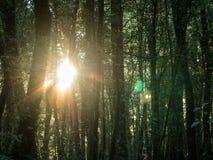 Ανατολή μέσω των δέντρων στοκ εικόνες