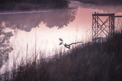 Ανατολή με Waterbird σε ένα αλατισμένο έλος Στοκ φωτογραφίες με δικαίωμα ελεύθερης χρήσης