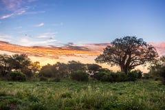 Ανατολή πέρα από την αφρικανική σαβάνα Στοκ Εικόνες