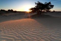 Ανατολή πέρα από τον αμμόλοφο άμμου και το δέντρο πεύκων Στοκ εικόνα με δικαίωμα ελεύθερης χρήσης