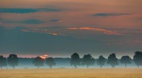 Ανατολή πέρα από τους τομείς καλαμποκιού και την απόμακρη αλέα δέντρων Στοκ Φωτογραφίες