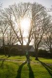 Ανατολή, σκιές, σκιαγραφίες, δέντρο Στοκ φωτογραφία με δικαίωμα ελεύθερης χρήσης