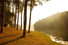 Ανατολή στην πόνο -πόνος-ung, δασικό πάρκο πεύκων Στοκ Εικόνες