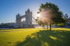 Ανατολή στη γέφυρα πύργων με το δέντρο και την πράσινη χλόη, Λονδίνο, UK Στοκ Φωτογραφίες
