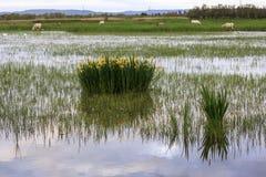 Ανατολή στους υγρότοπους των τριαντάφυλλων Στοκ εικόνες με δικαίωμα ελεύθερης χρήσης