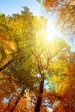 Ανατολή στο δάσος φθινοπώρου Στοκ Εικόνες
