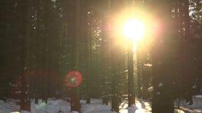 Ανατολή στο δάσος απόθεμα βίντεο