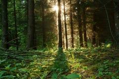 Ανατολή στο δάσος Στοκ φωτογραφίες με δικαίωμα ελεύθερης χρήσης