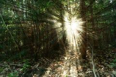 Ανατολή στο δάσος Στοκ Εικόνα