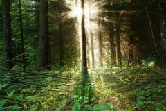 Ανατολή στο δάσος Στοκ Εικόνες