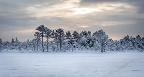 Ανατολή στο έλος Kõnnu Suursoo Στοκ Φωτογραφία