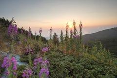 Ανατολή στο βουνό Λουλούδια Στοκ εικόνα με δικαίωμα ελεύθερης χρήσης
