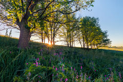 Ανατολή στο δρύινο άλσος Καλοκαίρι Στοκ εικόνα με δικαίωμα ελεύθερης χρήσης