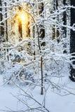 Ανατολή στο χειμερινό δάσος χιονιού στοκ φωτογραφία