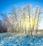 Ανατολή στο χειμερινό δάσος χιονιού στοκ εικόνες με δικαίωμα ελεύθερης χρήσης