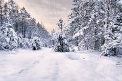 Ανατολή στο χιονώδες δάσος Στοκ φωτογραφία με δικαίωμα ελεύθερης χρήσης