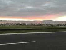 Ανατολή της Τάμπα Στοκ εικόνες με δικαίωμα ελεύθερης χρήσης