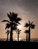 Ανατολή φοινικών σκιαγραφιών, Ισπανία Στοκ εικόνες με δικαίωμα ελεύθερης χρήσης