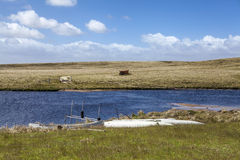 Ανατολικά Νησιά Φόλκλαντ νησί-2 βόρειων λιμνών Στοκ φωτογραφία με δικαίωμα ελεύθερης χρήσης
