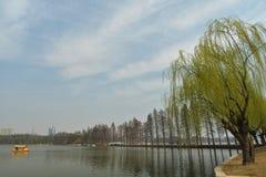 Ανατολική λίμνη την άνοιξη Στοκ Εικόνα