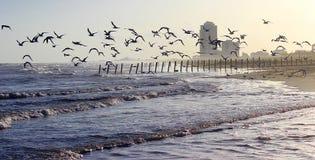 Ανατολική παραλία (χρώμα) στοκ φωτογραφία