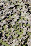 Ανατολικό Γιορκσάιρ κόλπων Thornwick Στοκ Εικόνες
