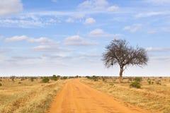 Ανατολικό εθνικό πάρκο Tsavo, Κένυα Στοκ Φωτογραφία